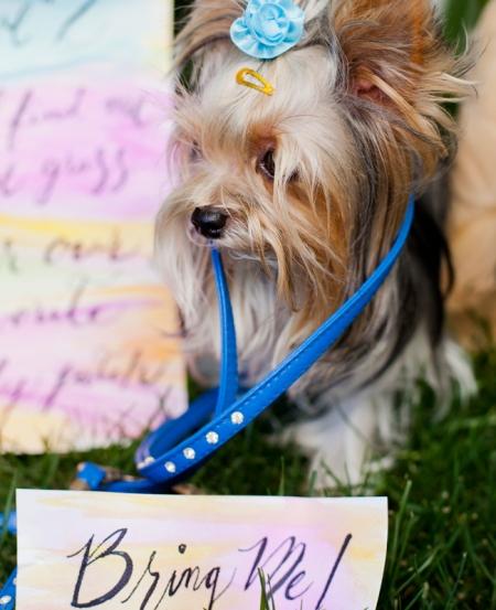 Valentine's Day Engagement Inspiration: Luna Photo / TheKnot.com